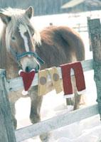 馬とサンタクロースの服