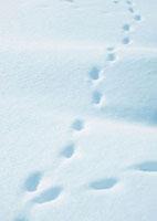 雪原の足跡 20027000041| 写真素材・ストックフォト・画像・イラスト素材|アマナイメージズ