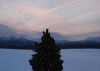 夕焼けとクリスマスツリー