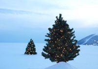 雪原に並ぶクリスマスツリー 20027000043| 写真素材・ストックフォト・画像・イラスト素材|アマナイメージズ