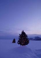 雪原に並ぶクリスマスツリー 20027000044| 写真素材・ストックフォト・画像・イラスト素材|アマナイメージズ