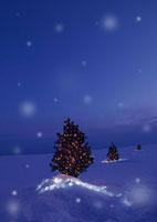 雪原に並ぶクリスマスツリー