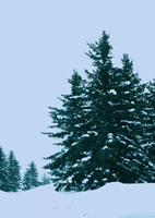 雪景色の道
