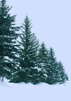 雪景色の道 20027000053| 写真素材・ストックフォト・画像・イラスト素材|アマナイメージズ