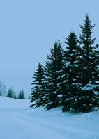 雪景色の道 20027000054| 写真素材・ストックフォト・画像・イラスト素材|アマナイメージズ