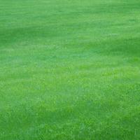 草原 20027001012| 写真素材・ストックフォト・画像・イラスト素材|アマナイメージズ