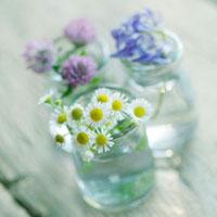 摘んできた3種類の野花