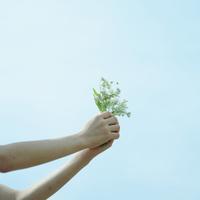 野花を受け渡す女性の手元