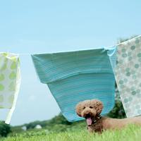 草原に干された洗濯物と犬