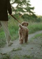 田舎道を散歩する中高年男性と犬 20027001473| 写真素材・ストックフォト・画像・イラスト素材|アマナイメージズ