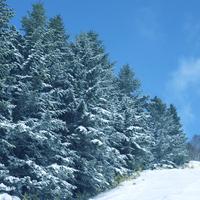 快晴の冬景色 20027003021| 写真素材・ストックフォト・画像・イラスト素材|アマナイメージズ