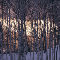 夕焼けの冬景色 20027003034| 写真素材・ストックフォト・画像・イラスト素材|アマナイメージズ