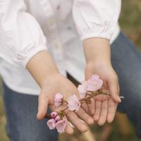 桜を持つ女の子の手元