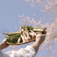 空にかざした山菜と桜の木