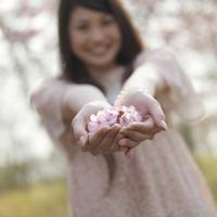 両手に桜の花びらを持つ女性