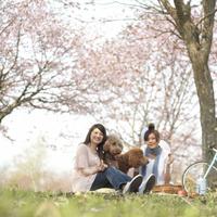 お花見をする2人の女性と犬