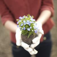 花の苗を持つ女性の手元