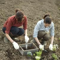 花の苗を植える2人の女性