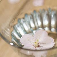 グラスに浮かべた桜