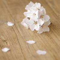 テーブルの上の桜