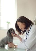 動物病院で子犬を診察する女獣医