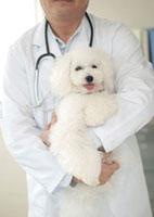 動物病院で子犬を抱きかかえて診察する獣医