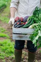 農園で採れたての野菜を持つシニア男性の手元