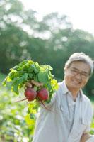 農園で採れたての赤かぶを手に持ち微笑むシニア男性