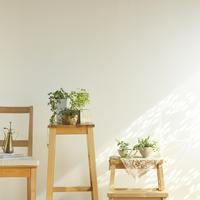 光が差し込む部屋にある木製家具と観葉植物