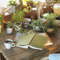 キッチンのテーブルに置かれた観葉植物と読みかけの本
