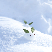 雪原の中の雪ウサギ