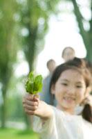 ポプラ並木で葉っぱを持ち微笑む女の子 20027006973| 写真素材・ストックフォト・画像・イラスト素材|アマナイメージズ