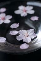水に浮かべた桜の花びら