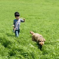草原を歩く女の子と犬