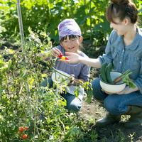 家庭菜園で野菜を収穫する親子