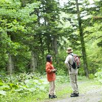 森林の中を歩くシニア夫婦