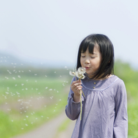 たんぽぽの綿毛を吹く女の子 20027008976| 写真素材・ストックフォト・画像・イラスト素材|アマナイメージズ