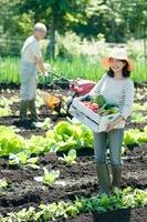 収穫した野菜を持ち微笑むシニア女性