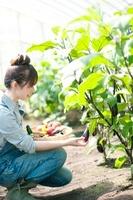 ナスを収穫する女性