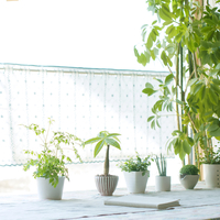 窓際に並ぶ植物