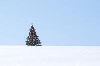雪原に立つクリスマスツリー 20027009844| 写真素材・ストックフォト・画像・イラスト素材|アマナイメージズ
