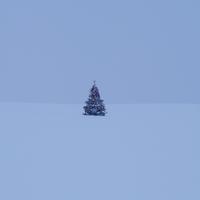雪原に立つクリスマスツリー