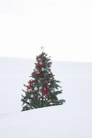 雪原に立つクリスマスツリー 20027009855| 写真素材・ストックフォト・画像・イラスト素材|アマナイメージズ
