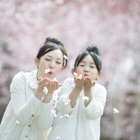 桜の花びらを吹く親子