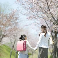 桜並木道で手をつなぐ親子の後姿