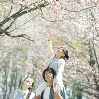 桜の前で肩車をする家族