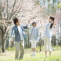 桜の前で手をつなぐ親子 20027010091| 写真素材・ストックフォト・画像・イラスト素材|アマナイメージズ