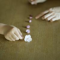 桜の花を並べる親子の手元