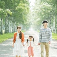 白樺並木を歩く家族
