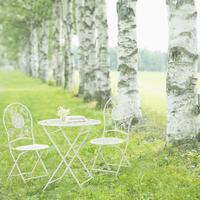 白樺並木とガーデンテーブル 20027010579| 写真素材・ストックフォト・画像・イラスト素材|アマナイメージズ
